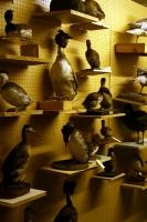 41_birds2.jpg